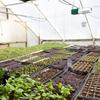 Heat Lamps for Growing Micros in the winter